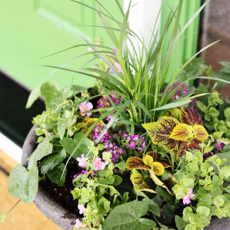 thrill fill spill how to plant front porch garden urns