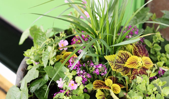 Dream House Update: How to Plant a Front Porch Container