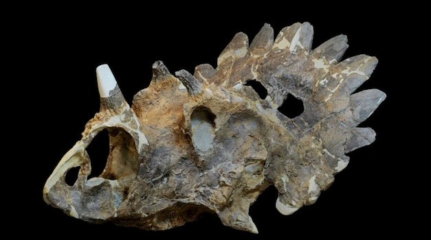 "A New Dinosaur Species Has Been Discovered, Named After ""Hellboy"""