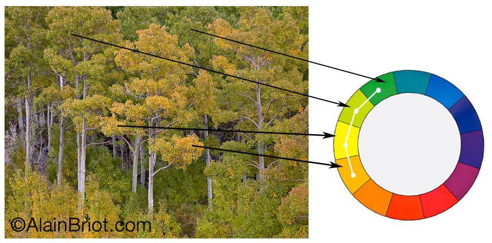 Analogous Trees Analogous Color Schemes Pinterest - sample pms color chart