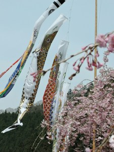 桜と鯉のぼり
