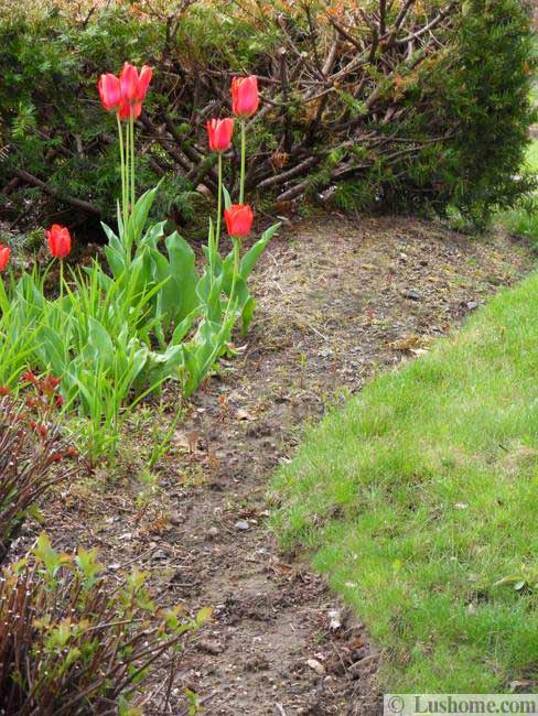 Tulip Table Spring Flowers And Yard Landscaping Ideas, 20 Tulip Bed