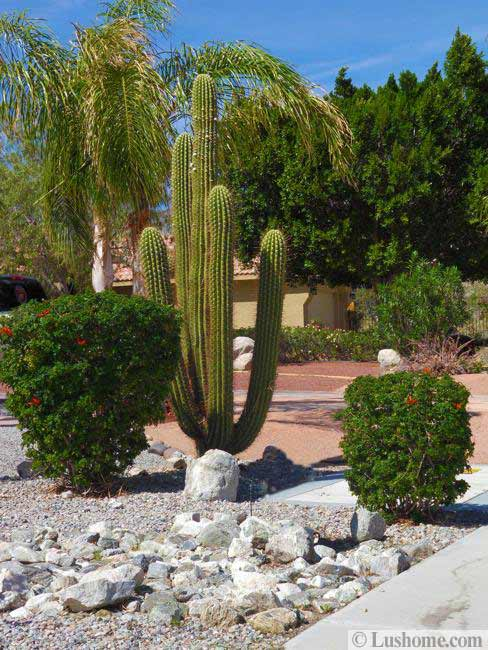 Mid Century Modern Patio Desert Landscaping Ideas To Save Water And Create Low