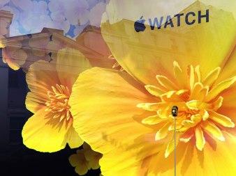 selfridges-londres-apple-watch (9)