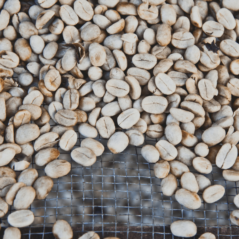 The Everyman's Guide to Coffee: The Bean, LVBX Magazine