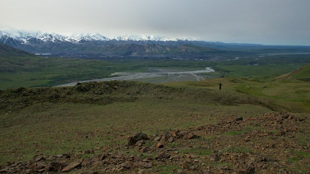 Kate hiking on the Thoro Ridge. Mountains around Denali (not visible) and the Muldrow Glacier.