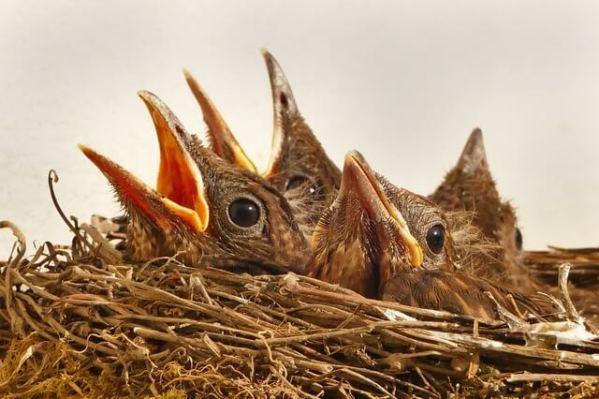 ポケモンGOで巣の場所を簡単に見つける方法とは?ソフトやアプリとは