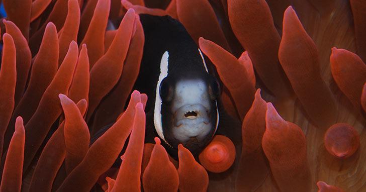 Compatibility Charts for Marine  Freshwater Aquatic Life