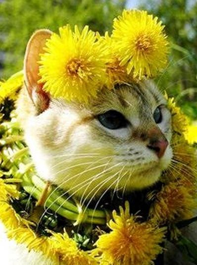 Cute Wallpapers Of All Kind Of Animals Top 10 Funny Images Of Cat Flowers Paperblog