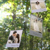 Videohive photo memories on trees 19338045 icon