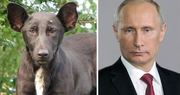 شبيه بوتين في عالم الحيوان