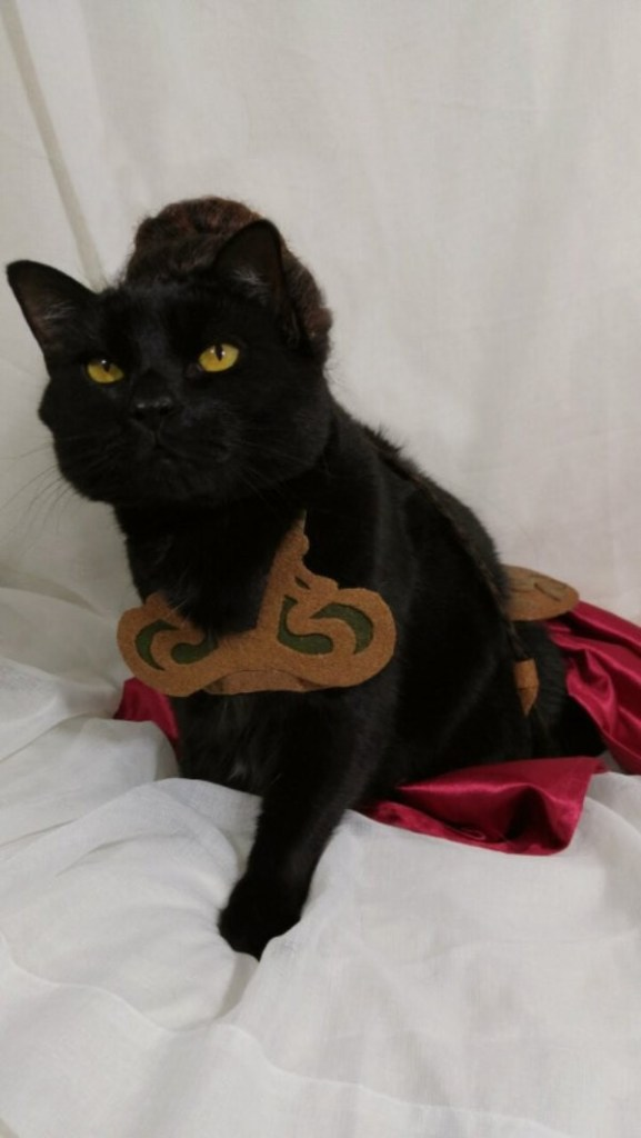 cat-cosplay-blog-6