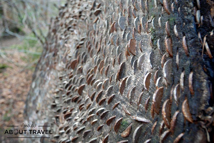 Un tronco lleno de monedas en el Hermitage de Dunkeld