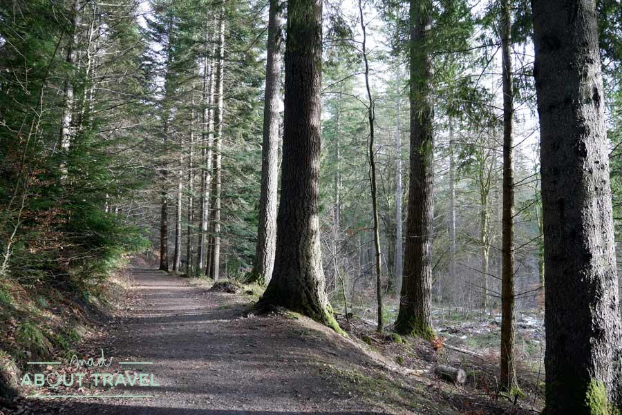 Ruta senderista en el Hermitage de Dunkeld y excursión al lago Tay