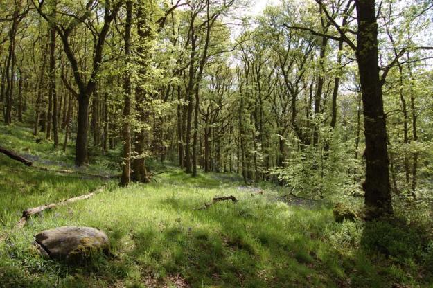 Queen Elizabeth Forest Park en Aberfoyle © Shutterstock.com