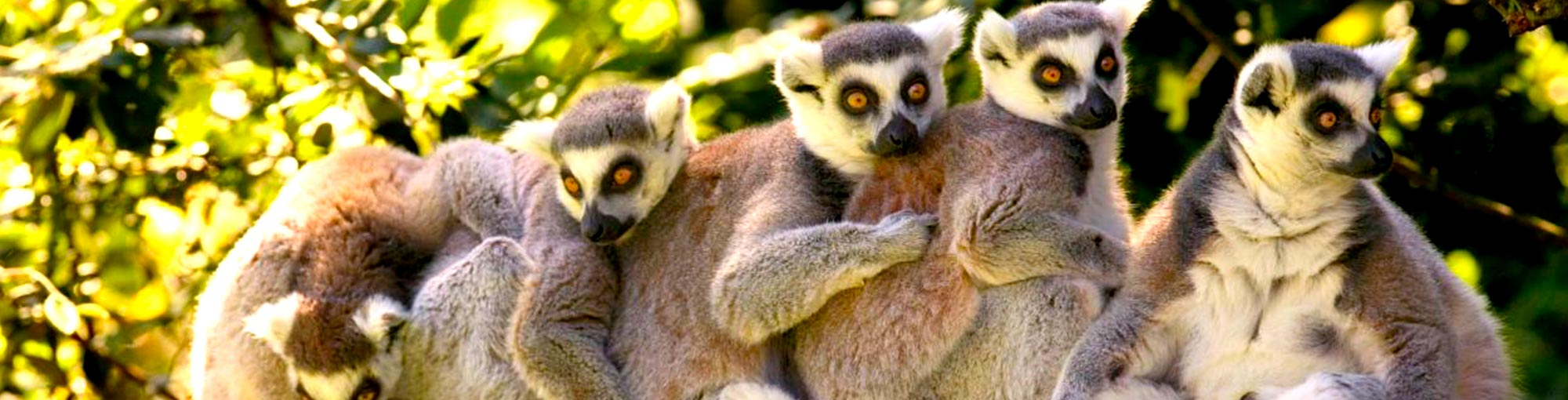 Forum Voyage Madagascar Visit Mada Tours Your Trusted Local Tour Company In Madagascar