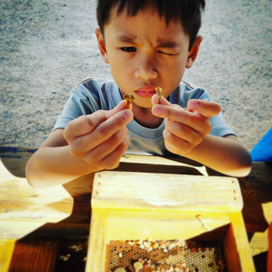 Found sharks teeth during fossil mining at luraycaverns summeractivitiyforkids miningexperienceforkids
