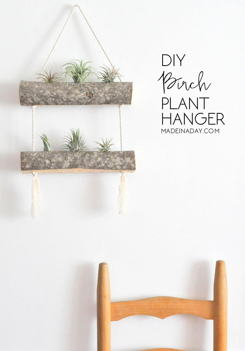 Air Plant Wall Holder Diy Birch Air Plant Hanger Made In A Day
