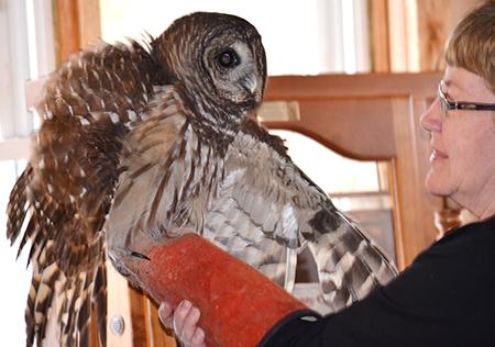 "Wildlife Rehabilitator Jean Soprano will be at the Great Swamp Conservancy's Winter Hibernation Festival with her ""Birds of Prey"" program Feb. 13."
