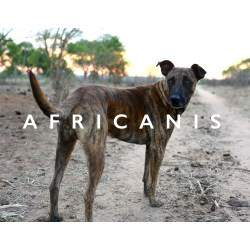 Small Crop Of African Dog Breeds