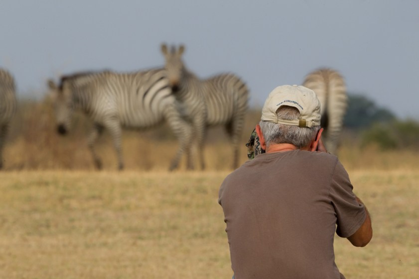 Photographing a herd of zebras in South Luangwa.