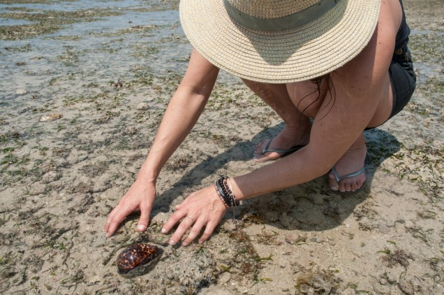 Cowrie shells are always an exciting discovery on the beach!