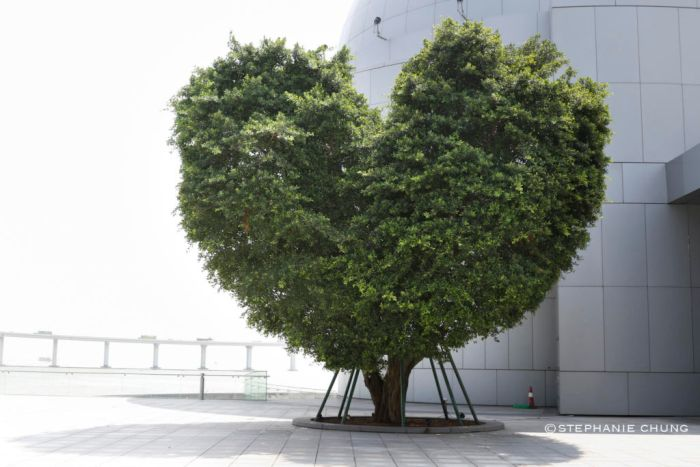 heart-tree-macau