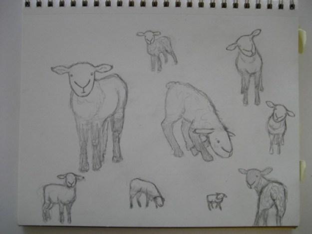 Sketches of Woolfred and his sheepy pals.