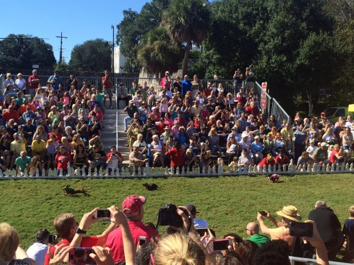 Wiener dog races at Oktoberfest in Savannah, GA