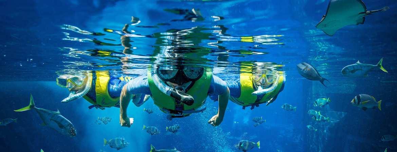 *Guest Post* Diving in Dubai