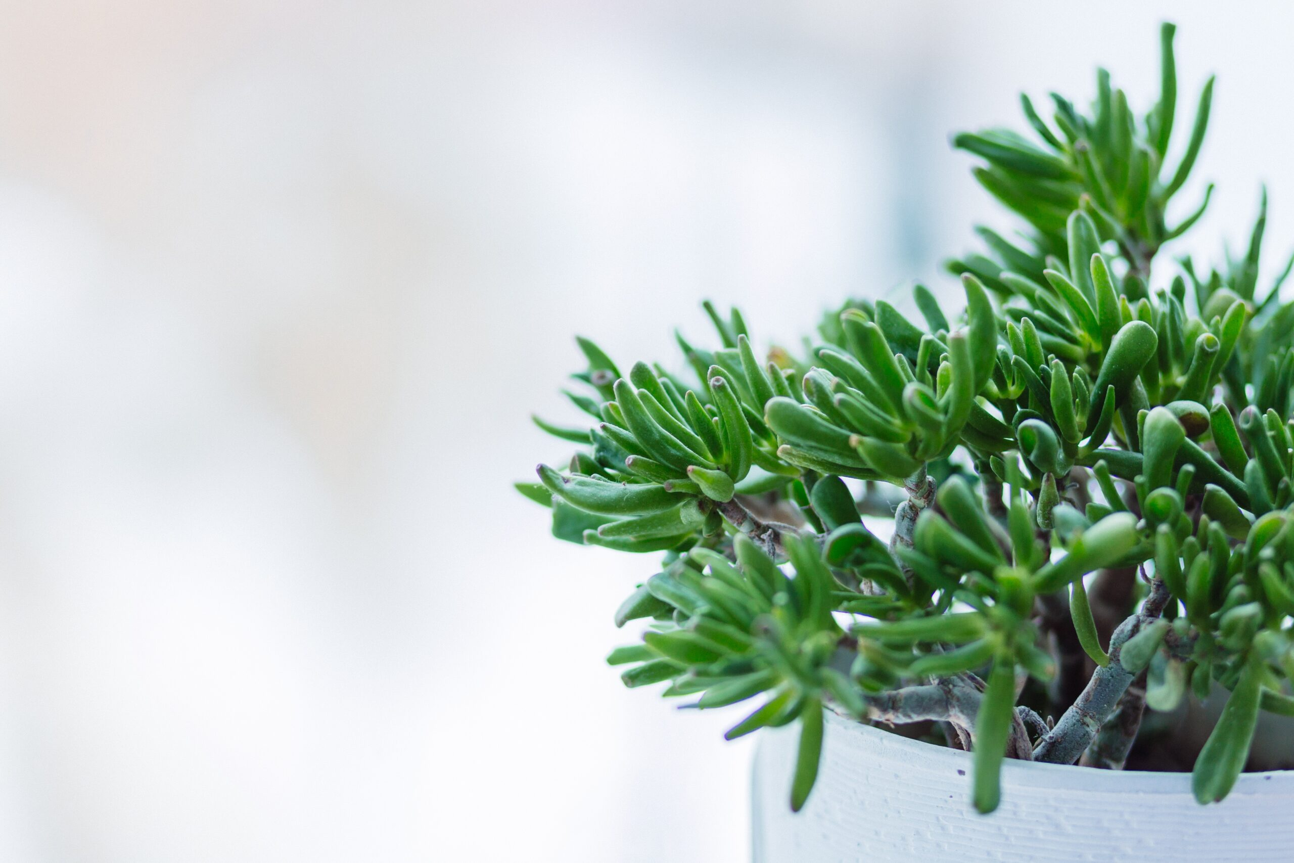Indoor Small Plants Clean T O A Guide To Indoor Plants In Small Spaces