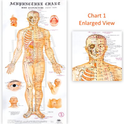 acupuncture wall chart - Aylaquiztrivia