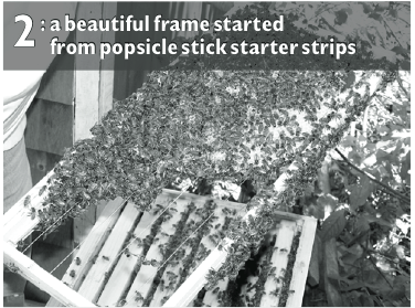 (Photo 2) Popsicle Stick Starter Strips