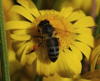 Best Management Practices for Beekeeping