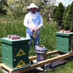 Beekeeping Then and Now – My Experience
