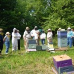 Workshops Swarm Prevention, Management, and Capture & Summer Nucs