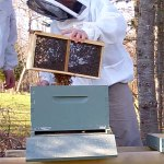 April 2012 – The Beekeepers Calendar