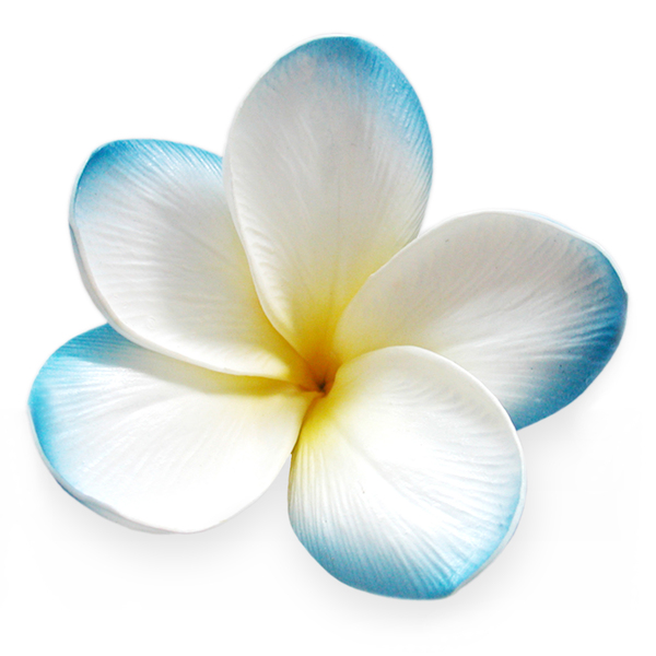 Lighting Box Diy Sky Blue Real Touch Frangipani Flower Head