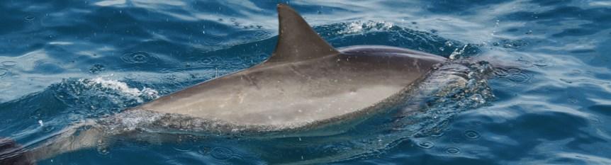 slim-dolphin