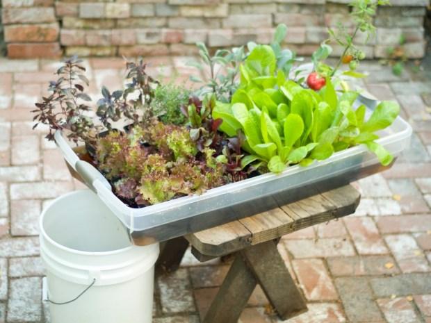 MAKE | Hydroponic Veggie Garden