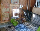 Automatic Chicken Coop