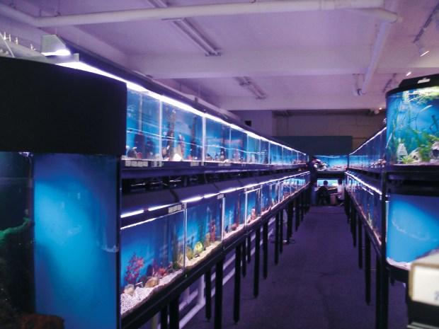 Tabletop Biosphere