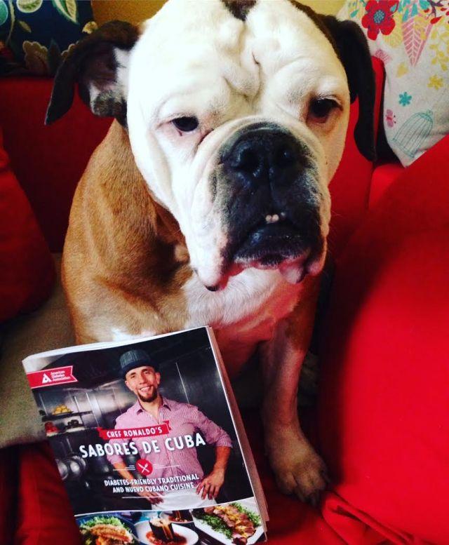 cuba-sabores-book-with-bulldog