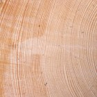 Country Scientist —  How to Study Tree Rings
