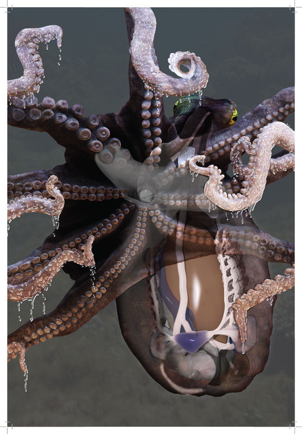 Kansas City Home Builders Creating An Accurate Anatomical Model Of An Octopus In 3d