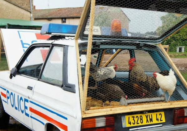 police-car-chicken-coop-2