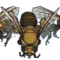 3_bees