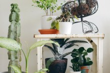 Home Tip: Keeping Indoor Plants Alive