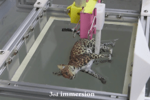 New Research Allows for Incredibly Colored 3D Prints