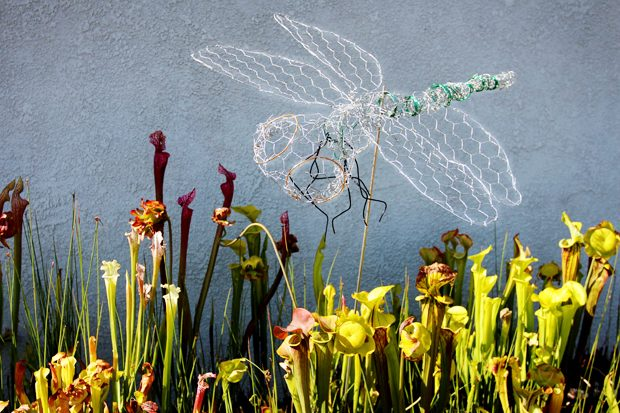 Make a chicken wire dragonfly decoration for your garden for Chicken wire craft ideas